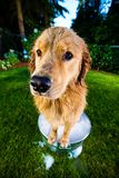 Wet Dog in a bubble bath Stock Images