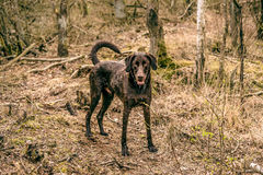 Wet dog in the forest Royalty Free Stock Photos