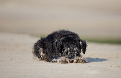 Wet dog resting on beach Stock Photo