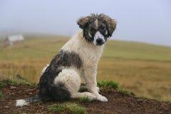 Wet dog. Sad wet puppy looking back Royalty Free Stock Photo