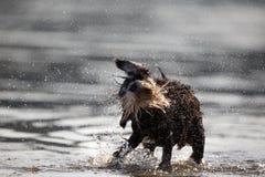 Wet dog shaking Stock Photo