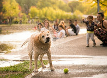 Wet dog shaking the water Royalty Free Stock Photo