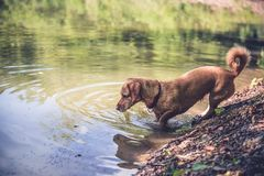 Wet dog by the lake Stock Images