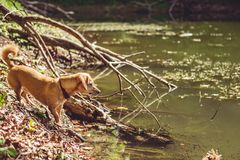 Wet dog by the lake Royalty Free Stock Photo