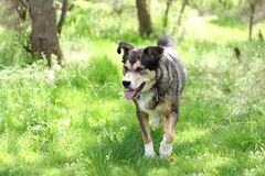 Wet Dog Walking Through Woods Stock Images