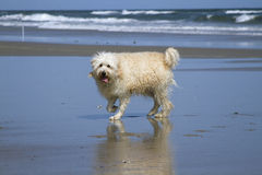 Wet Doig at Ocean Stock Image