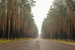 Wet empty asphalt road through forest in foggy rainy autumn day, highway in rural landscape. Toned stock photo