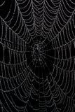 Wet, empty spider web Royalty Free Stock Image