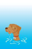 Wet faced dog with sad eyes Royalty Free Stock Images