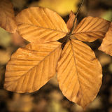 Wet Fall Leaves Royalty Free Stock Photography
