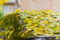 Wet fallen leaves on car Stock Photo