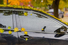 Wet fallen leaves on car Royalty Free Stock Image