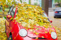 Wet fallen leaves on car Royalty Free Stock Photo