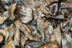 Wet fallen leaves on the ground Stock Photos