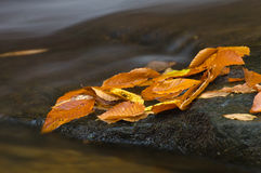 Wet Fallen Leaves Stock Photography