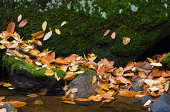 Wet Fallen Leaves on Moss Covered Rock Stock Images