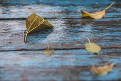 Wet fallen leaves on an old table Royalty Free Stock Photography