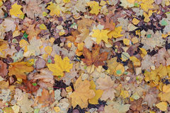 Wet fallen leaves underfoot with rain drops Stock Images