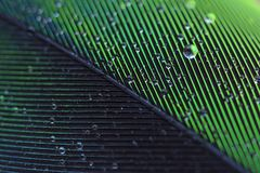 Wet Feather Stock Images