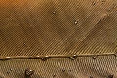 Wet feather Stock Photo