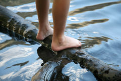 Wet feet. Feet of a child standing on a log in the water Royalty Free Stock Image