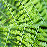 Wet Fern Royalty Free Stock Photos