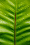 Wet Fern Leaf. Abstract close up of raindrops on a fern leaf Stock Photography