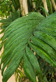 Wet Fern Leaf Stock Photos