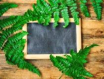 Wet fern leaves, blackboard in frame Stock Photos