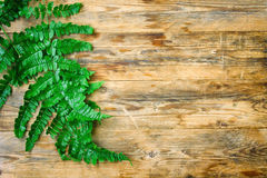 Wet fern leaves lie on table Stock Photos