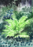 Wet fern in misty forest. Watercolor original painting of fern in the forest. Wet method Royalty Free Stock Image