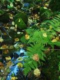 Wet fern stem with yellow aspen leaf in leaves forest. Fresh green and wet fern stem with yellow aspen leaf in leaves forest Royalty Free Stock Photography