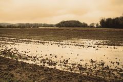Wet field Royalty Free Stock Images