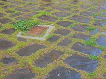 Wet Flagstones Stock Photos