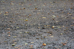 Wet floor. And leaf on the floor royalty free stock photos