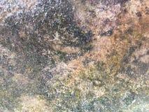 Wet floor. On old area stock photo
