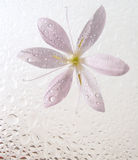 Wet floral background. With pink flower Stock Photo