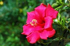 Wet flower Stock Photography