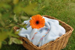 Wet Flower on Blue Baby Blanket Royalty Free Stock Photo