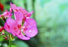 Wet flower. Close up of a wet flower Stock Photo