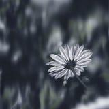 Wet Flower. Stock Photos