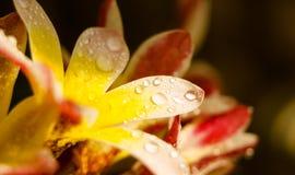 Wet flower petals. Colorful floral closeup background. Wet flower petals. Colorful floral closeup background with blur Stock Photos