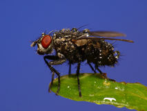 Wet fly Royalty Free Stock Images