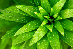 Wet Foliage Stock Photography