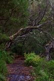 Wet footpath in a tropical forest. Portuguese island of Madeira stock image