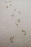 Wet Footprints on a Sandy Beach Stock Images