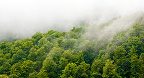 Wet forest Royalty Free Stock Photo