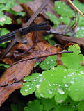 Wet forest floor. Forest floor with dead leaves and water drops Royalty Free Stock Photos