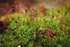 Wet forest moss Stock Photos