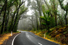 Wet Forest Road Royalty Free Stock Image